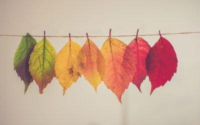 Autumn Newsletter – 2021